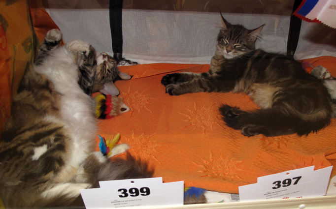 Salon du chat l 39 album photos 94 citoyens - Salon de chat gratuit ...