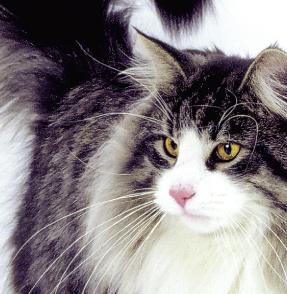 Incarnez un chien ou un chat et choisissez son rang dans for Salon chat sexe
