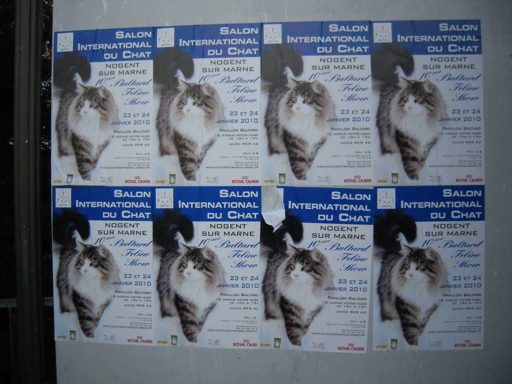 Salon du chat 2010 le baltard feline show de retour - Salon de chat gratuit ...